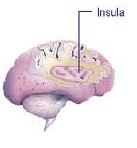 Localização da Insula no cérebro